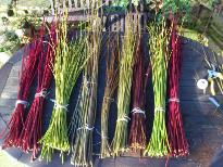 Willow and Dogwood perpared for weaving